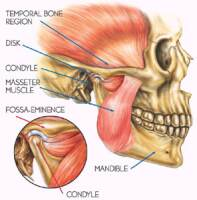 TMJ Muscles and Joints